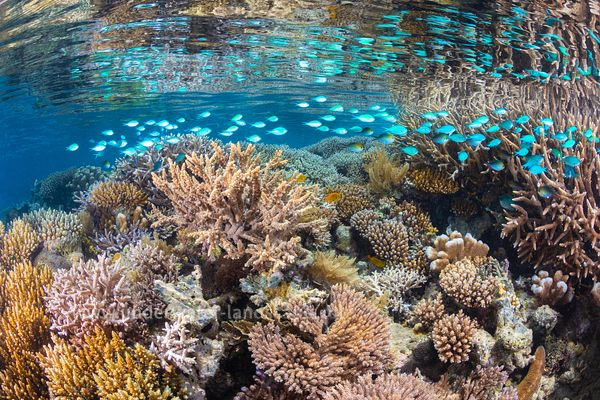 Mayotte's coral reefs