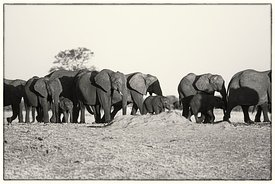 Zimbabwe_Elephant_9241_Photo_Neil_Emmerson