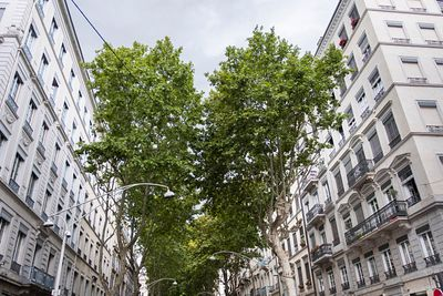 Platane le long du Cours Vitton, Lyon, France / Plane tree along the Cours Vitton, Lyon, France