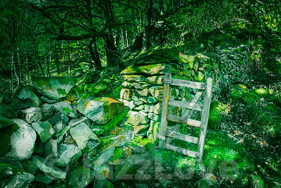 Stone wall with open gate in magical woodland.Fairytail scenery.