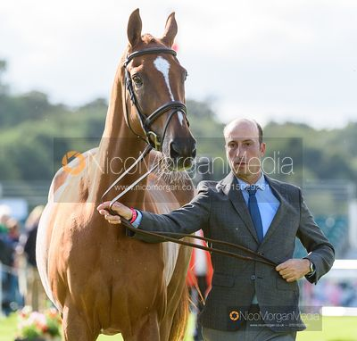 Tim Price and BANGO at the trot up, Land Rover Burghley Horse Trials 2019