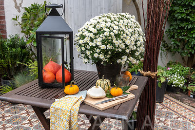 Autumn table decoration with cucurbita and Chrysanthemum in a patio