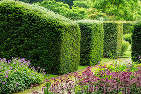 Clipped Yew and Beech hedges - Taxus baccata and Fagus sylvatica - at Scampston Hall Walled Garden, North Yorkshire, designed...