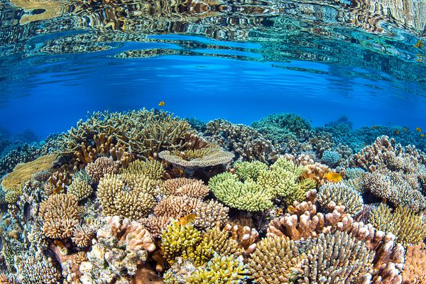 Coral biodiversity of the North Reef of Mayotte