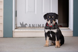 A puppy sitting in front of the door