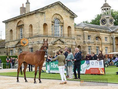 Sarah Ennis and WOODCOURT GARRISON at the trot up, Equitrek Bramham Horse Trials 2019