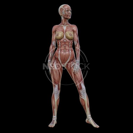 cg-body-pack-female-muscle-map-neostock-28