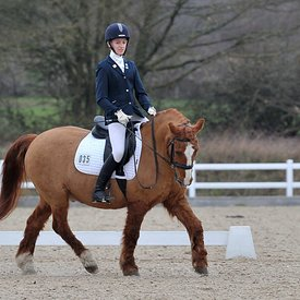 16/02/2019 - Unaffiliated dressage - Brook Farm training centre
