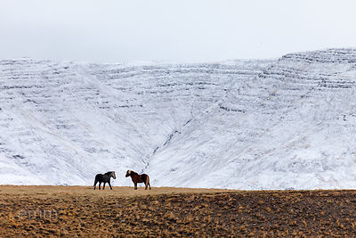 Hesta_fundur_-_horse_meeting_Iceland_emm.is