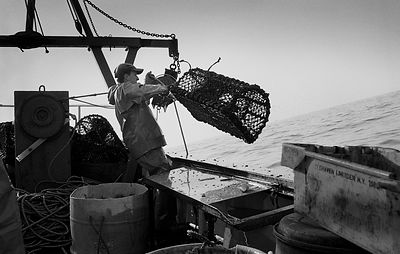 Fisherman aboard the Newlyn Crabber the 'William Harvey'.