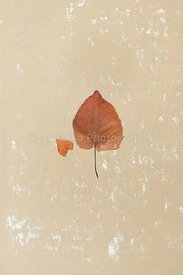 isolated_leaf_005