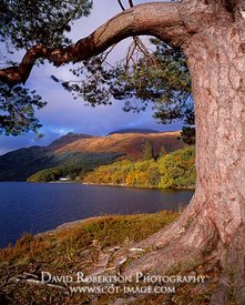 Image - Loch Lomond and Ben Lomond, Rowardennan, Scotland