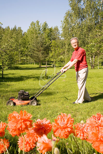 Senior man cutting lawn