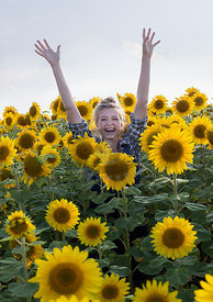 Sunflowers by Bauer
