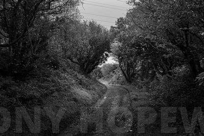 Holloways_and_Tramways-1000468