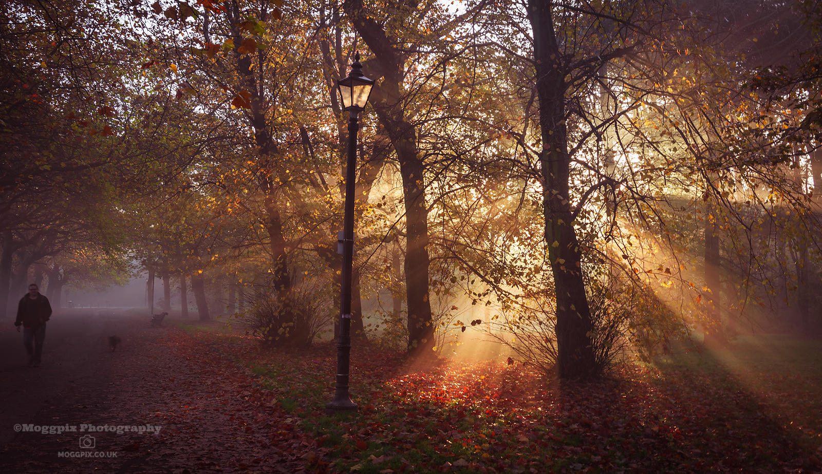A Burst of Autumn Sunlight