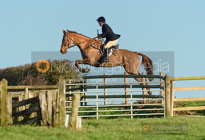 Jumping a fence off Hades Lane. The Quorn Hunt at Fox Covert Farm 10/1