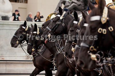 Closeup of Seven  Black Cavalry Horses