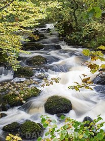 Stream running through Ariundle Oakwood National Nature Reserve, Sessile Oak woodland in the Sunart region of the Scottish Hi...