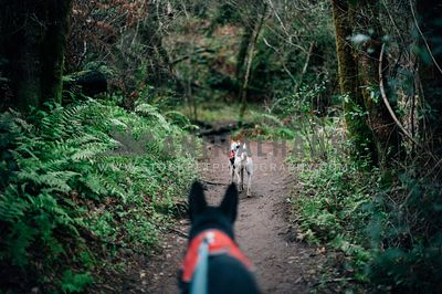 Two dogs hiking down a forest trail