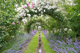 Nepeta Walk featuring rill and climbing roses on arches: Rosa Seagull; Rosa Wedding Day; Rosa Bobbie James & Rosa Caroline Te...