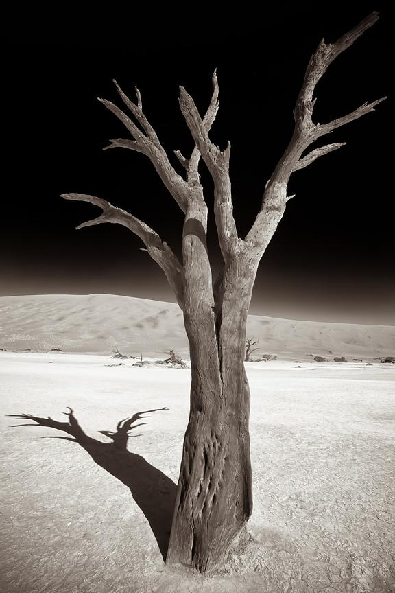 Ancient acacia tree in deserted area of Deadvlei in Namib desert, Namibia.