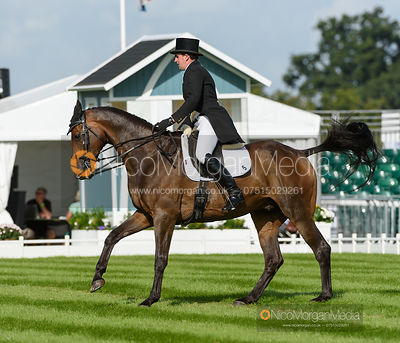Alan Nolan and BRONZE FLIGHT - dressage - Land Rover Burghley Horse Trials 2016