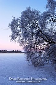 Image - Tree at dusk, ice covered Lake of Menteith