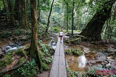 Woman walking on wooden bridge in the rainforest, Thailand