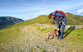 A dog taking biscuits from it's owners hand when out on a walk to Hopegill Head in the Lake District, England, UK.