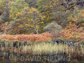 Autumn colour around loch in Inverpolly National Nature Reserve, North West Highlands Scotland October