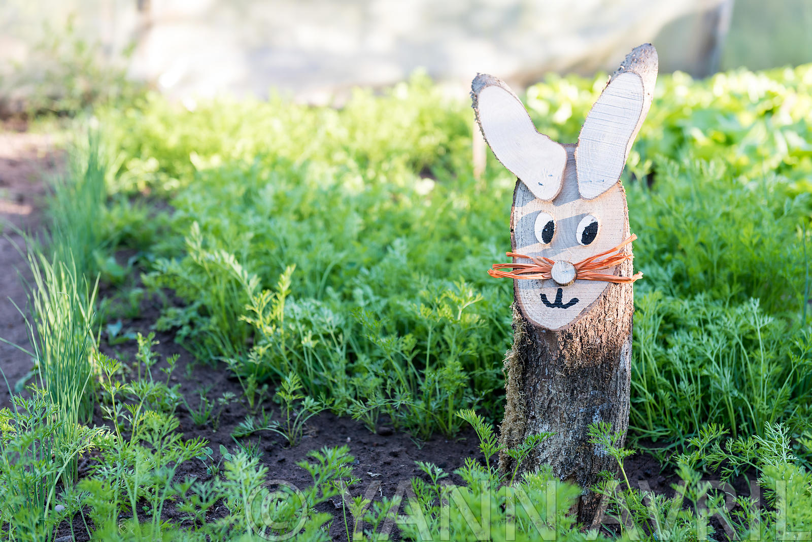 Daucus carota-Ornamental wooden Rabbit in a kitchen garden