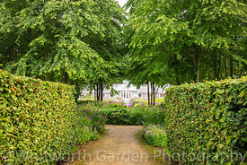 Beech Hedges leading to The Katsura Grove - Cercidiphyllum japonicum - and Victorian Conservatory at Scampston Hall Walled Ga...