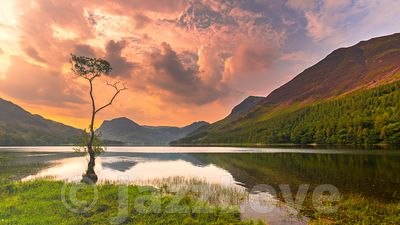 Sunrise over Buttermere lake and the lone tree.