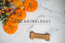Fall flat lay with pumpkins and dog treat