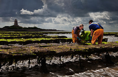 Oyster fishermen, St. Vaast la Hougue, Normandy, France.
