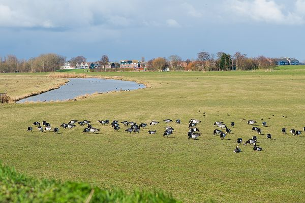 Birds in the wet meadows landscape.