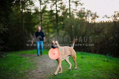 A malinois showing off her frisbee while a man stands in the background