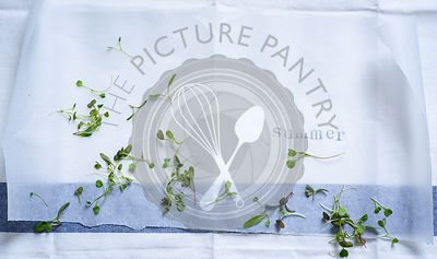 Summer stamped on to baking paper, background with micro herbs