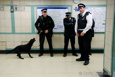 071129_DogDrugCheck_052 Police officers conduct a drug check with sniffer dogs at Mile End Underground station, London. Decem...