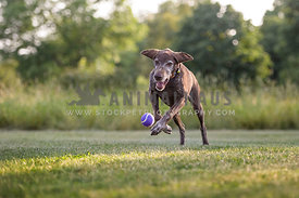 Senior dog playing in a park