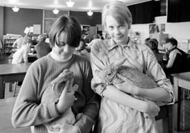 #83814,  The school rabbits, Whitworth Comprehensive School, Whitworth, Lancashire.  1970.  Shot for the book, 'Family and Sc...