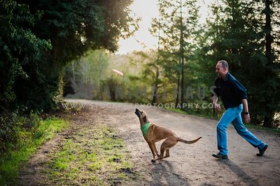 A malinois and man playing with a frisbee