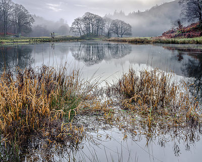River_Brathay_reeds
