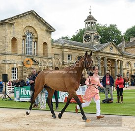 Alice Dunsdon and SAMBO III at the trot up, Equitrek Bramham Horse Trials 2019