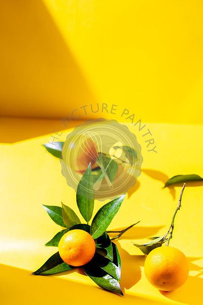 Fresh orange fruits with orange tree leaves on yellow background. sunlight effect