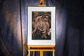 Namib Lion 2002  Photographer Neil Emmerson  £975 inc UK VAT   Edition of 25.