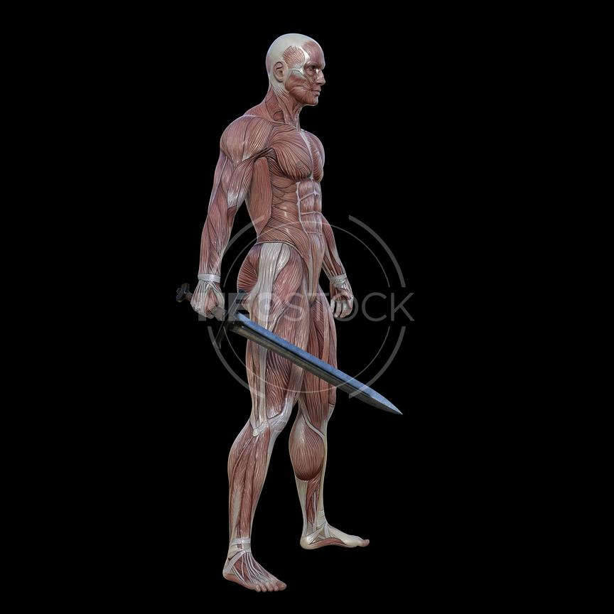 cg-body-pack-male-muscle-map-neostock-8