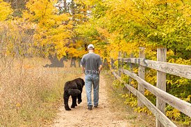 A man and a newfoundland dog on an autumn walk