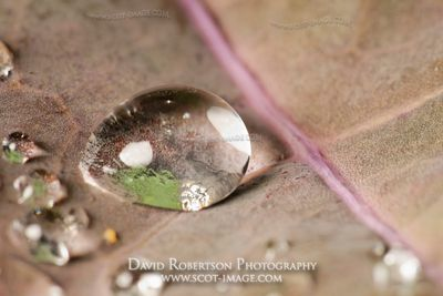 Image - Water droplets on cabbage leaf.